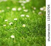 Camomiles In Green Grass Close...