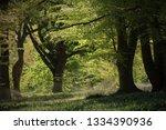 silent peaceful forest | Shutterstock . vector #1334390936