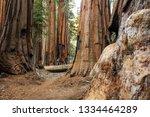 hiker in sequoia national park... | Shutterstock . vector #1334464289