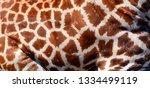 skin of a giraffe  giraffa... | Shutterstock . vector #1334499119