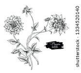 sketch floral botany collection.... | Shutterstock .eps vector #1334520140