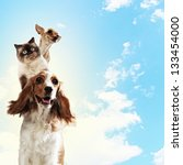 Stock photo three home pets next to each other on a light background funny collage 133454000
