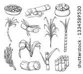 sugar cane plant set  farming... | Shutterstock .eps vector #1334589530
