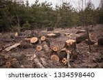 Deforestation  Forest Clearing