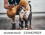 domestic life with pet. man... | Shutterstock . vector #1334629829