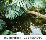 water wavers in a small pond... | Shutterstock . vector #1334664050