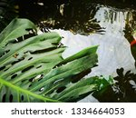 water wavers in a small pond... | Shutterstock . vector #1334664053