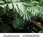 water wavers in a small pond... | Shutterstock . vector #1334664056