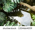 water wavers in a small pond... | Shutterstock . vector #1334664059