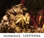 The Small Spotted Catshark ...