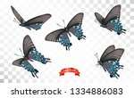 vector illustration butterflies ... | Shutterstock .eps vector #1334886083