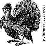 turkey | Shutterstock .eps vector #133489034