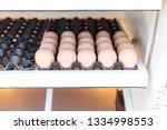 hatched eggs of chicken | Shutterstock . vector #1334998553