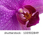 Purple Orchid Flower With Water ...