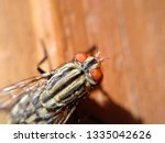 extremely close up of home fly... | Shutterstock . vector #1335042626