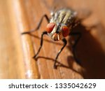 extreme magnification of fly... | Shutterstock . vector #1335042629