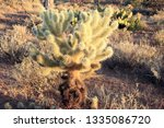 a beautiful cactus in the... | Shutterstock . vector #1335086720