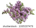 lilac bouquet isolated on white ... | Shutterstock . vector #1335237473