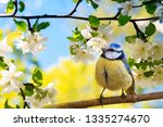 Spring natural background with...