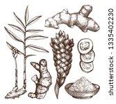 hand drawn ginger illustration. ... | Shutterstock .eps vector #1335402230