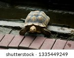 Stock photo the african spurred tortoise also called the sulcata tortoise is a species of tortoise this is one 1335449249