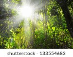 beautiful magical forest on a... | Shutterstock . vector #133554683