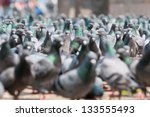 Pigeons On The Durbar Square ...