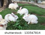 white rabbit on green grass | Shutterstock . vector #133567814
