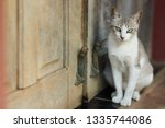 cat with green eyes sit next to ... | Shutterstock . vector #1335744086