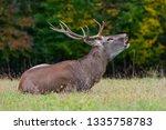 deer on meadow in spring time | Shutterstock . vector #1335758783