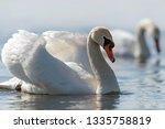 swan on blue lake water in... | Shutterstock . vector #1335758819