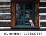 Barn Owl In House Window In...