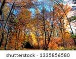 way through a light flooded... | Shutterstock . vector #1335856580