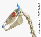 3d rendered medically accurate... | Shutterstock . vector #1335926963