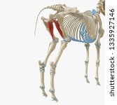 3d rendered medically accurate... | Shutterstock . vector #1335927146