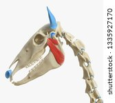 3d rendered medically accurate... | Shutterstock . vector #1335927170