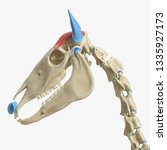 3d rendered medically accurate... | Shutterstock . vector #1335927173