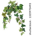 watercolor botanical ivy... | Shutterstock . vector #1335970493