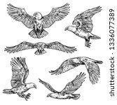 eagle flight sketches  bird... | Shutterstock .eps vector #1336077389