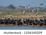 various water birds at bueng... | Shutterstock . vector #1336140209