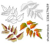 leaf autumn colorful... | Shutterstock . vector #1336179659