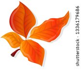 leaf autumn colorful... | Shutterstock . vector #1336179686