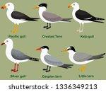 cute bird vector illustration... | Shutterstock .eps vector #1336349213