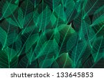 colorful leaf texture and... | Shutterstock . vector #133645853