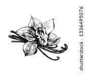 vanilla  spice. flower. vector... | Shutterstock .eps vector #1336495076