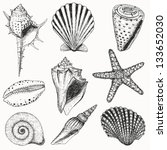 Shells collection. Vector set with seashells and starfish for you design and scrapbooking - stock vector