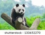 panda bear sitting in tree   Shutterstock . vector #133652270