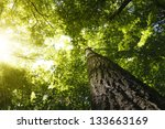 Green Forest. Tree With Green...