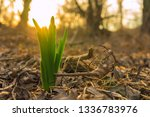 the first green sprout in last... | Shutterstock . vector #1336783976