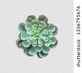 succulent plant top view on... | Shutterstock . vector #1336795676